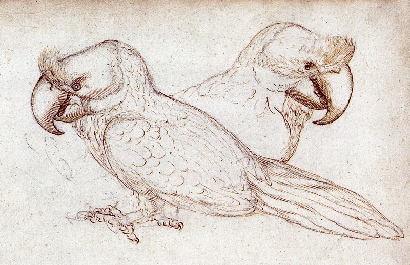 Sketch in the Gelderland ship's journal, 1601